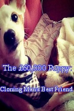 The £60,000 Puppy: Cloning Man's Best Friend