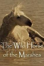 Wild Horses Of The Marshes